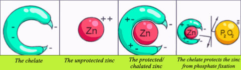 Chelated Zinc Graphic